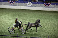 111.  AHHS Youth Medallion Hackney-Harness Pony National Championship