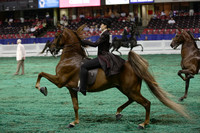 18.  World's Championship Horse Show-ALL UP