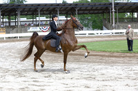 68.  Junior Five-Gaited Stake