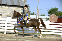 43.  Arabian-Morgan Hunter Pleasure Championship