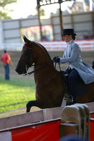 42.  Three-Gaited Pony