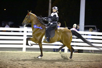 67.  Road Horse Under Saddle