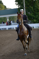 03.  Amateur Three-Gaited