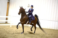 60.  ASB Amateur-Juvenile Five-Gaited Championship