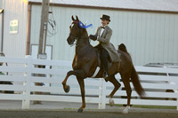 55.  ASB Amateur-Juvenile Three-Gaited