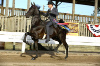 71.  Two-Year-Old Three-Gaited
