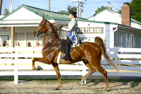 49.  ASB Three-Gaited Park