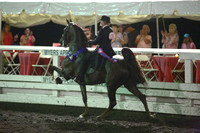 125.  ASB Five-Gaited Stake